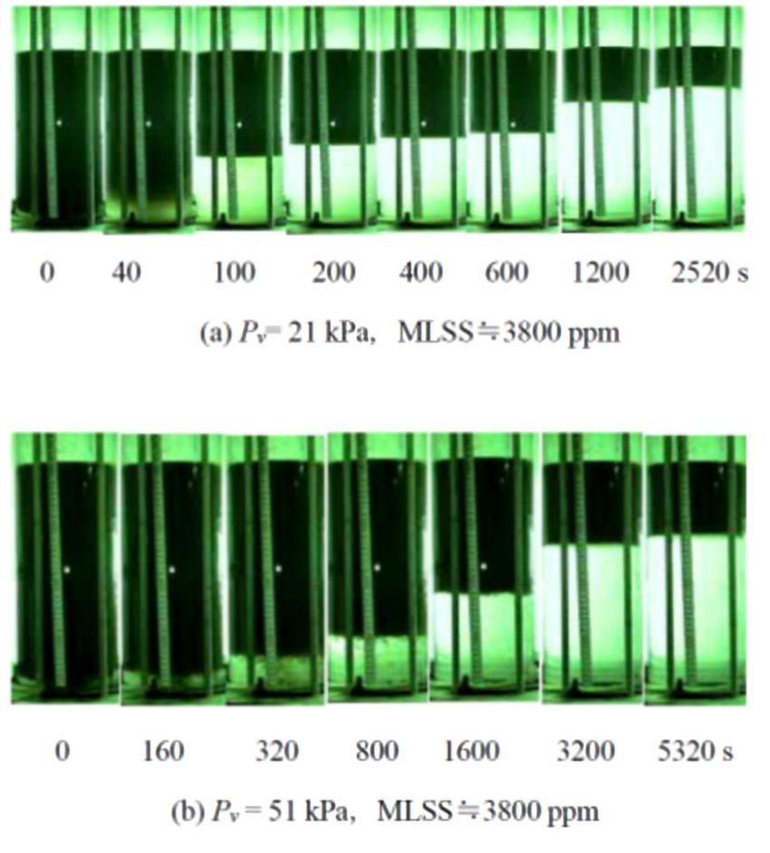 活性汚泥の減圧浮上濃縮特性に関する研究結果の一部
