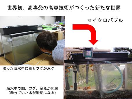 海水中に、鯛・フグ・金魚が同居している様子
